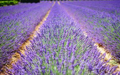 13. dnevi odprtih vrat v Vrtu zdravilnih in aromatičnih rastlin